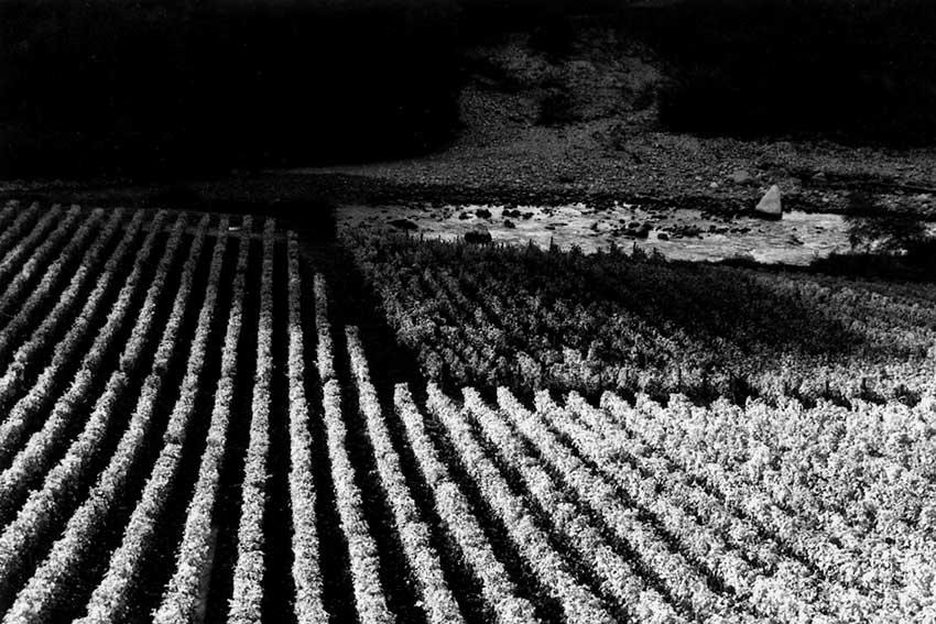 23-vignes-de-Marin